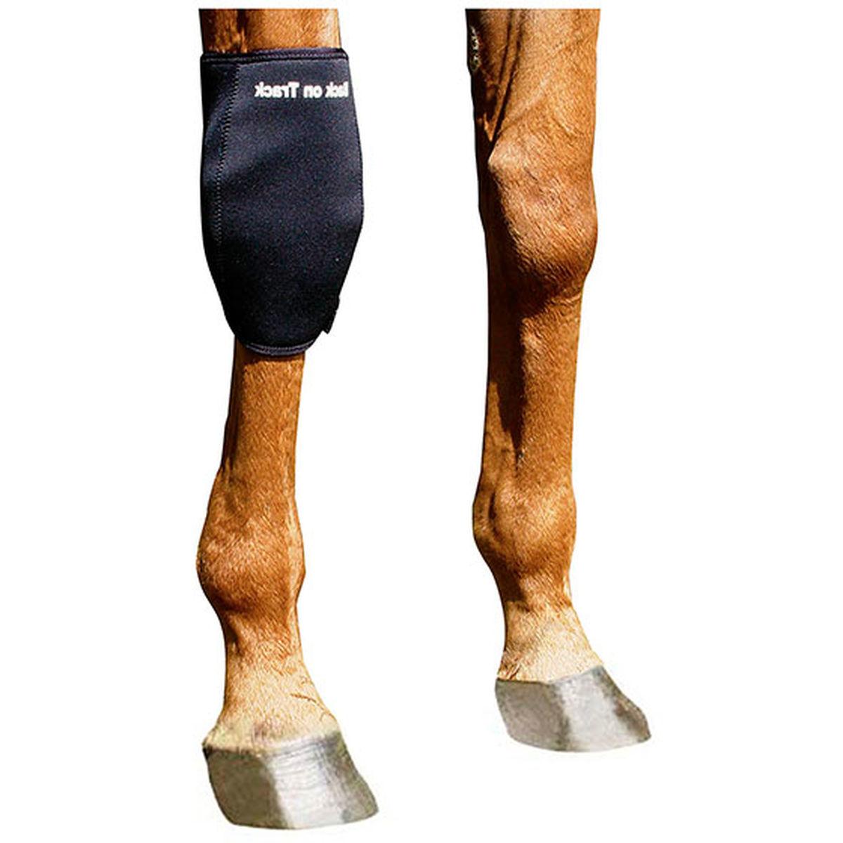 Back on Track till hästens ben.