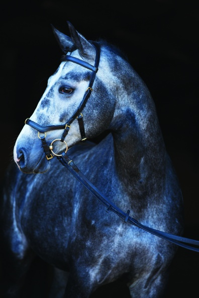 Horseware Träns, Grimmor & tillbehör